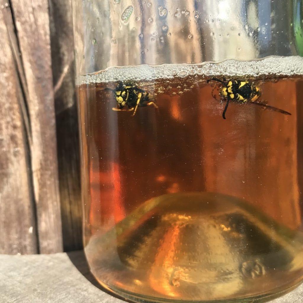 wespenkoninginnenvanger met bier suiker oplossing en wespenkoninginnen erin