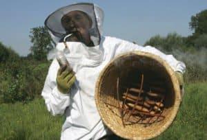 artikel stentor imelda bouwt bijenstal raalte noord