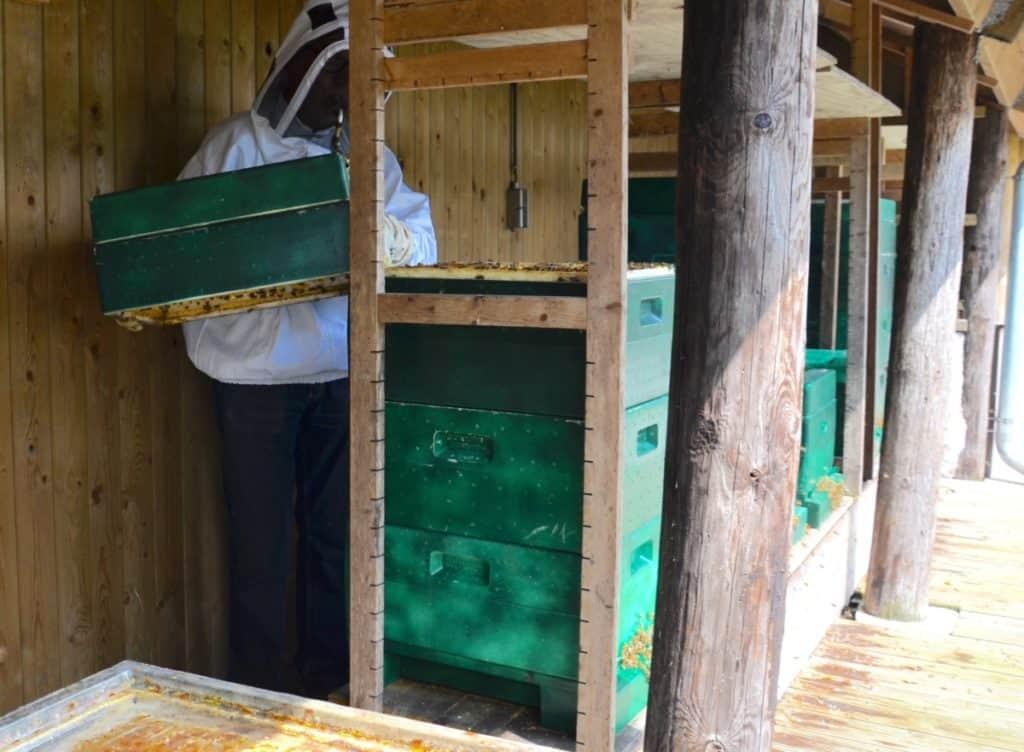 imker Ben die lichtgewicht bijenkast onderdelen optilt