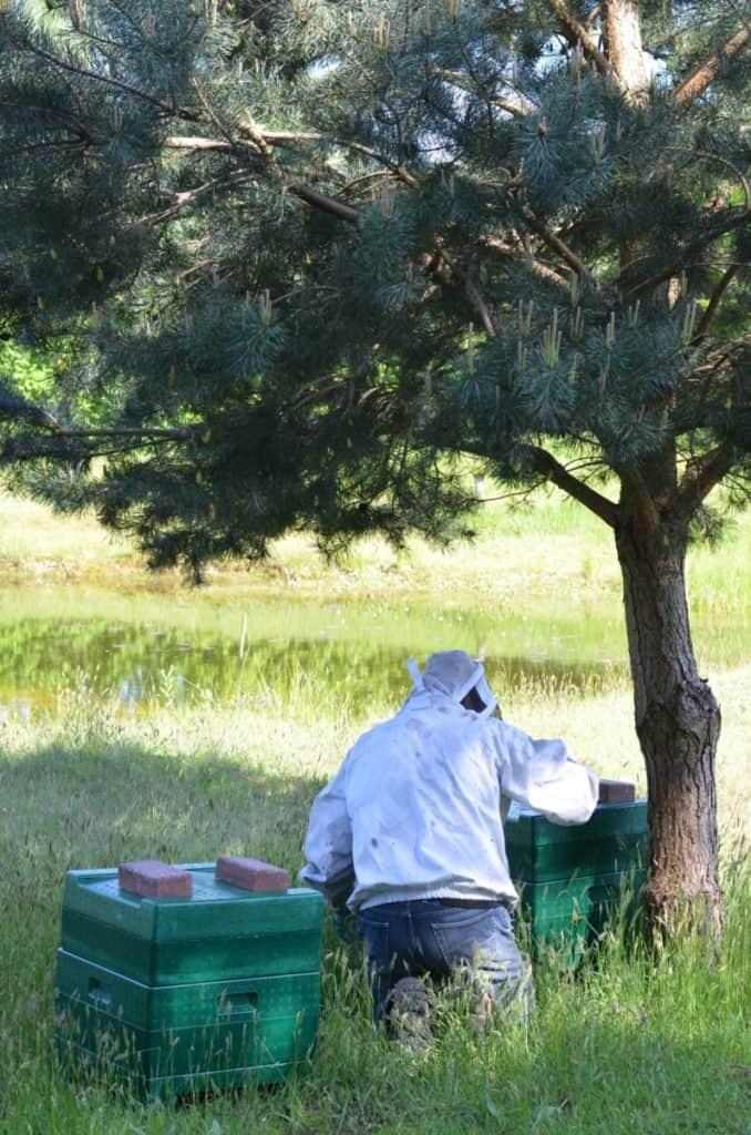 Bijenkasten met imker in het open veld