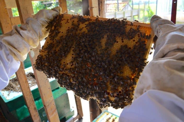 bijenraam vol bijen en broed tot aan de rand van het raampje