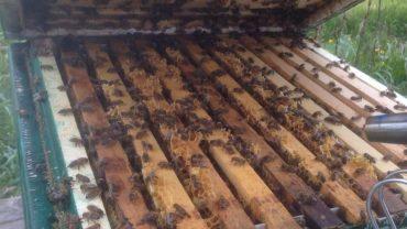bijenkast inspectie met open bijenkast