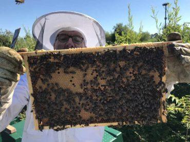 Imker Ben inspecteert een raampje bijen met broed
