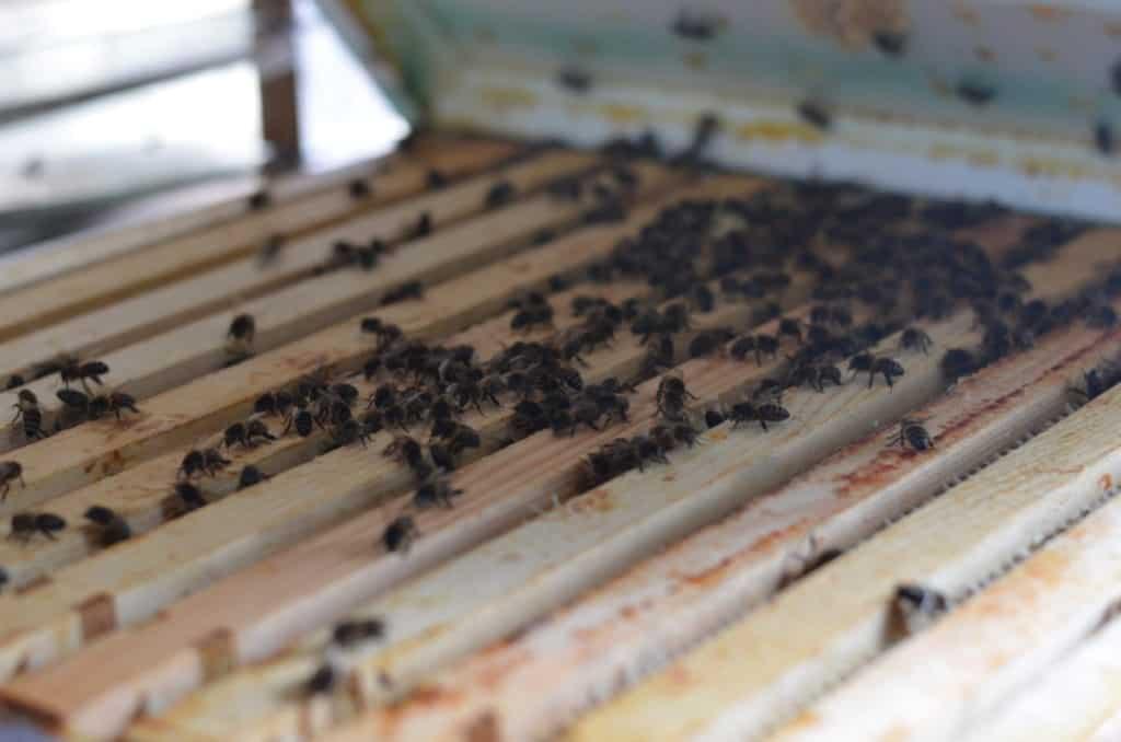 geopende bijenkast met raampjes en bijen
