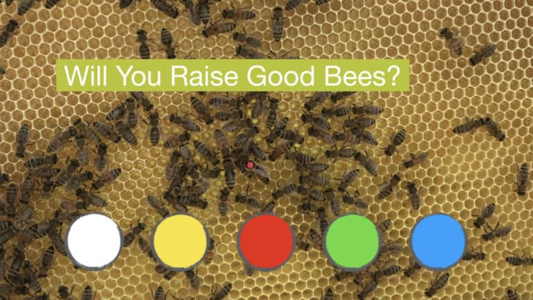 Will You Raise Good Bees met de 5 kleuren