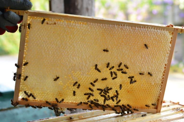raampje met honing en bijen
